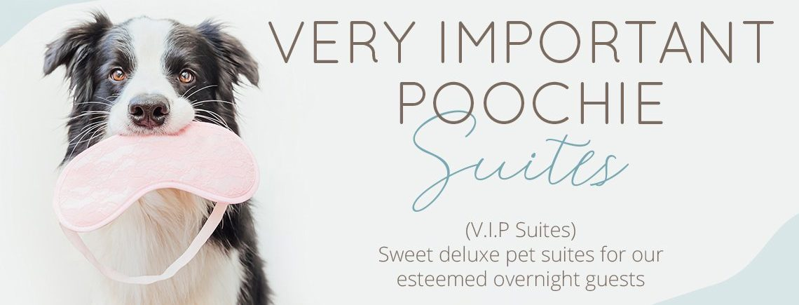 VIP Overnight Pet Boarding by Poochies Austin Groomers and Pet Lounge